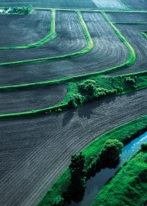 photo of buffer strips